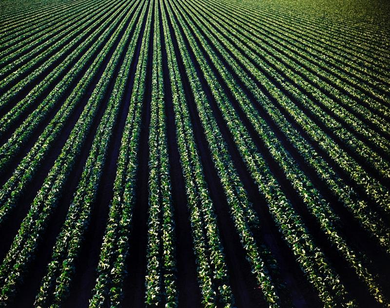 http://agriseiva.com.br/wp-content/uploads/2019/06/background-bright-cropland-974316.jpg